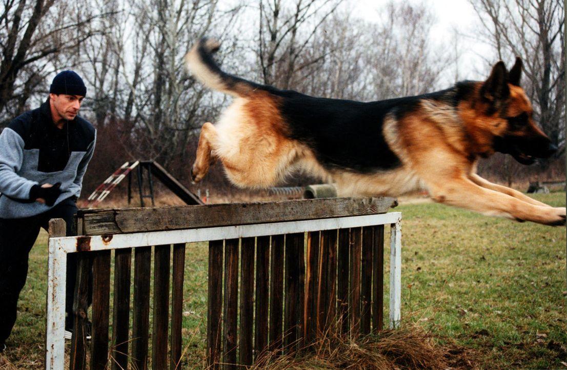 Kommissar Brandtner (Gedeon Burkhard) und Rex trainieren bei der Hundestaffel, um in Form zu bleiben. - Bildquelle: Ali Schafler Sat.1