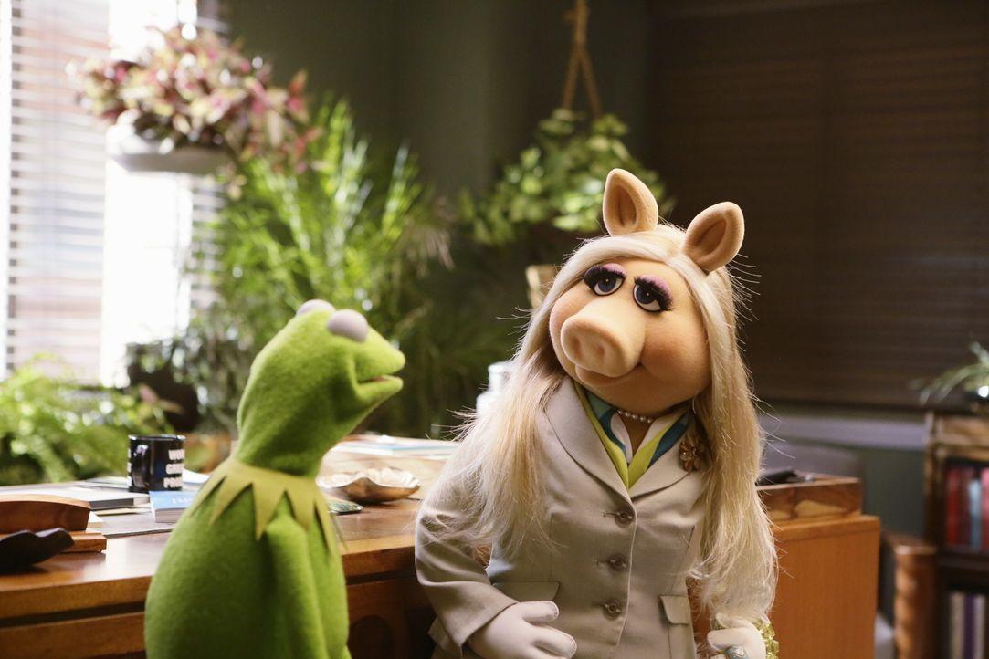 Versuchen, die Show zu retten: Miss Piggy (r.) und Kermit (l.) ... - Bildquelle: Nicole Wilder ABC Studios
