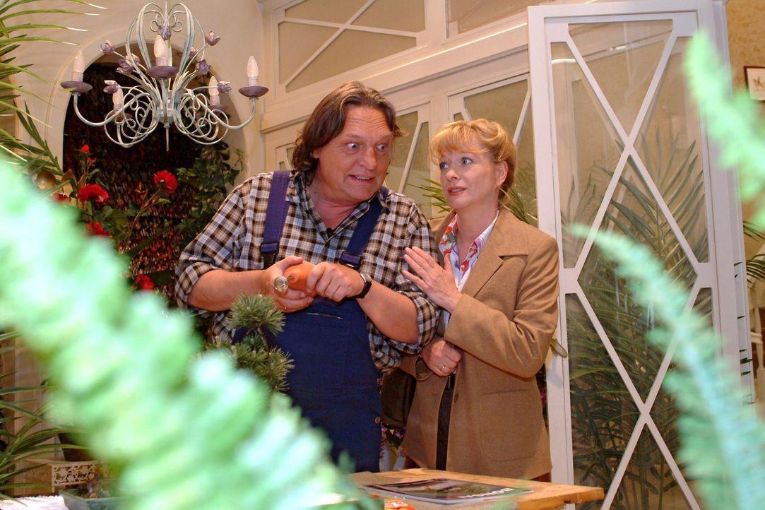 Helga (Ulrike Mai, r.) sucht Bernd (Volker Herold, l.) bei der Arbeit auf und schildert ihm die wahren Motive für Lisas erfundene Verlobung. - Bildquelle: Sat.1