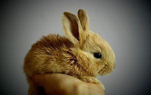 kaninchen-hand