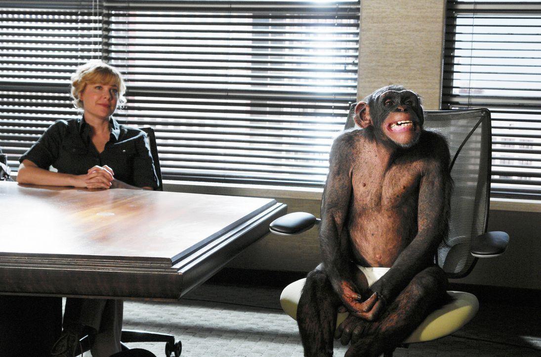 Dr. Leila Maxford (Jennifer Aspen) und ihr Schimpanse: Sie bittet die Anwälte in der Kanzlei, ihr bei einem ungewöhnlichen Fall beizustehen ... - Bildquelle: Disney - ABC International Television