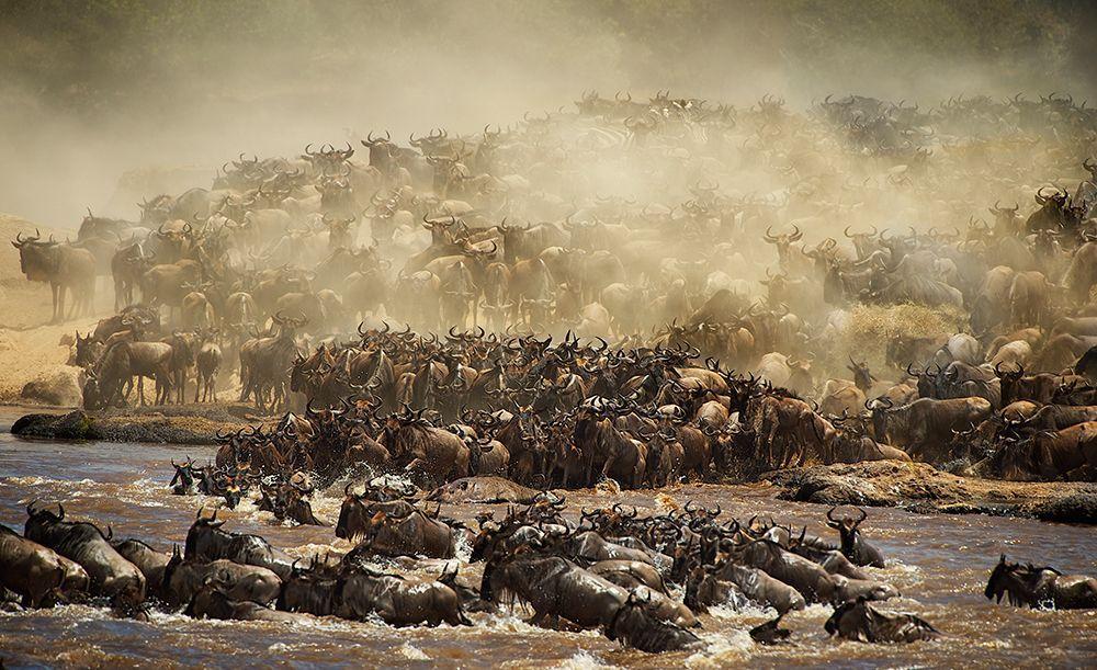 Tierwanderung