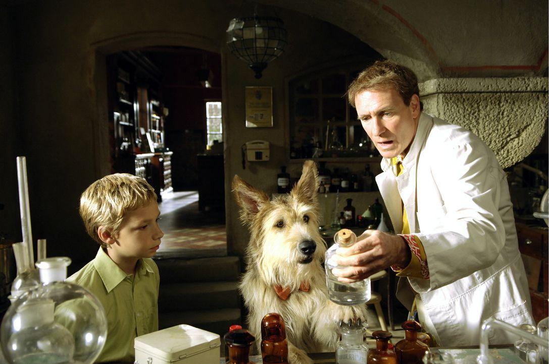 Eigentlich findet Apotheker Sternheim (August Zirner, r.) Hunde unhygienisch, für seinen 12-jährigen Sohn Max (Manuel Steitz, l.) jedoch, gab es s... - Bildquelle: Constantin Film Verleih GmbH