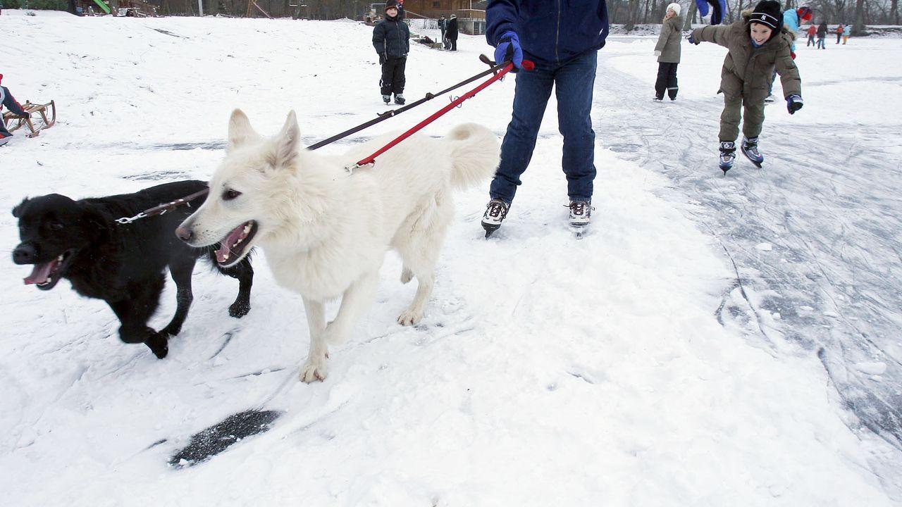 Weisser-Schaeferhund5 - Bildquelle: dpa