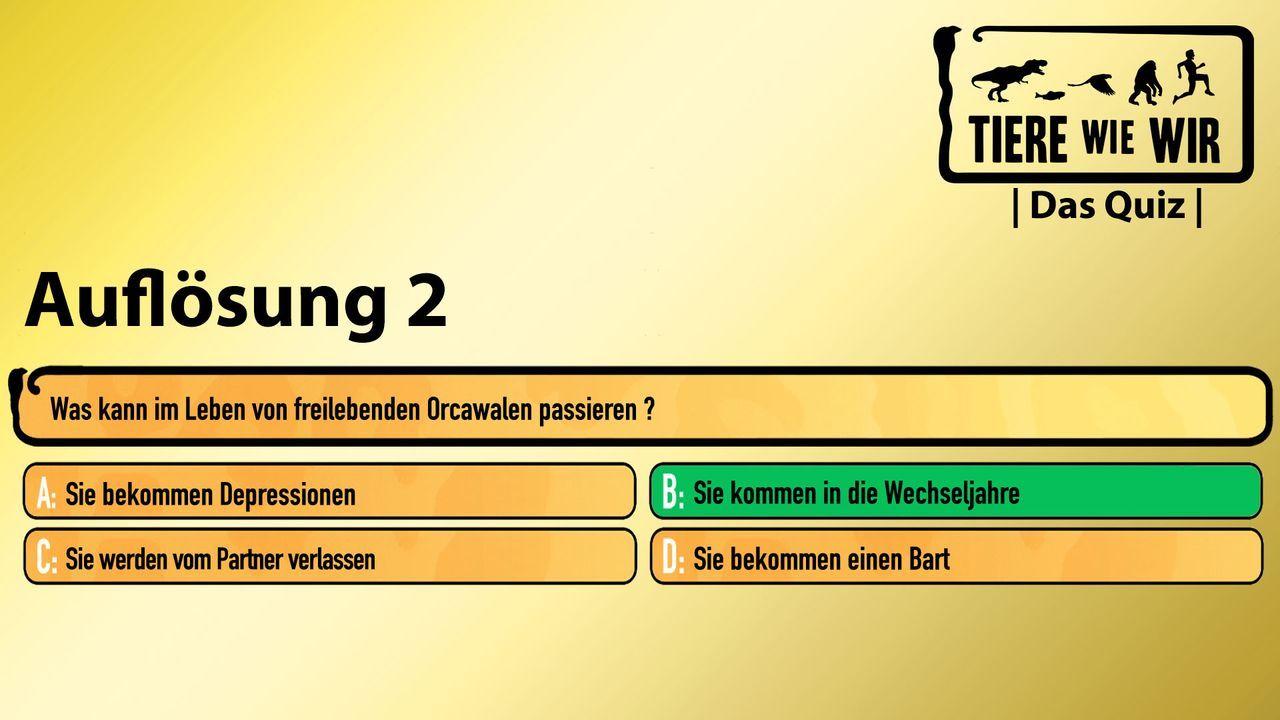 2_Auflösug