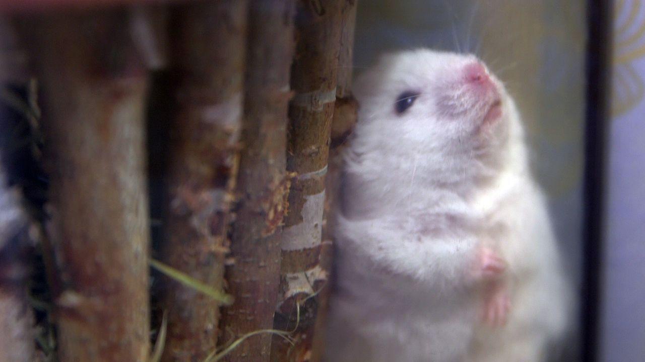 pbb-Hamster_05