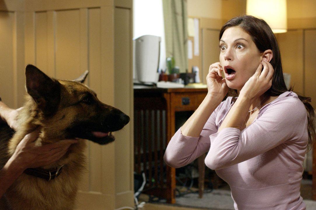 Das Abendessen bei Mike entwickelt sich zu einem Wettstreit zwischen Edie und Susan (Teri Hatcher), um die Gunst von Mike, wobei dessen Hund Bongo e... - Bildquelle: Touchstone Television