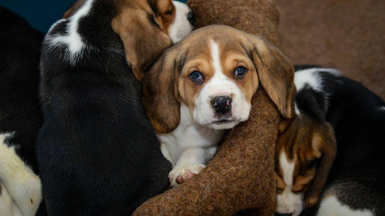 HundeWelpe4 - Bildquelle: dpa