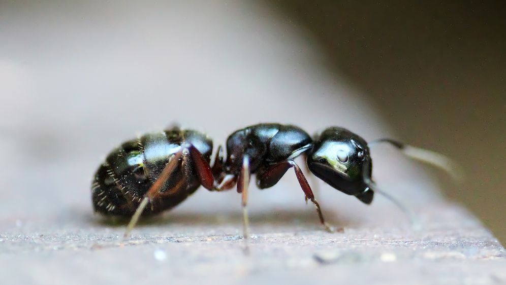 Ameisen Bekampfen Vom Garten Fernhalten Sat 1 Ratgeber