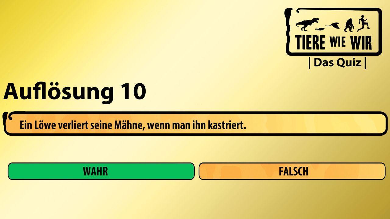 10_Auflösung_WF_Löwe