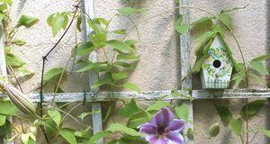 Winterharte Balkonpflanzen: Tipps- Sat.1 Ratgeber Zimmer Und Balkonpflanzen Winter Tipps