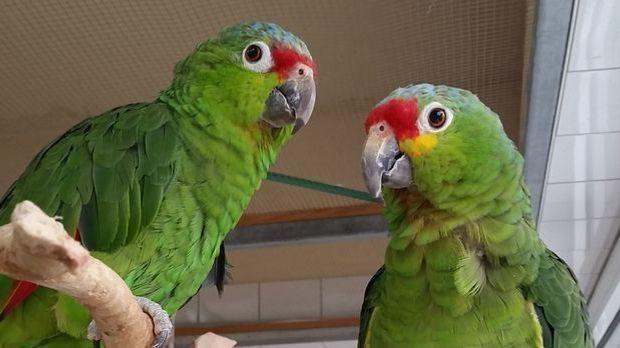 Rico und Tini