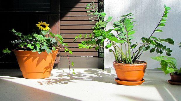 Pflanzen f r terrasse tipps sat 1 ratgeber for Pflanzen terrasse