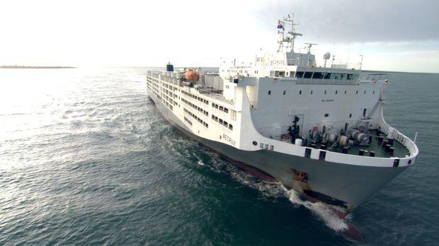 Die MV Becrux ist eine moderne Arche Noah. Das 100 Million Dollar teure Schif...