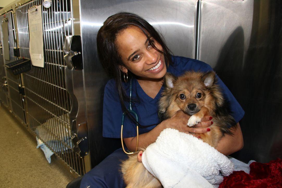 Cheryl bekommt heute Besuch vom neun Monate alten Teddy. Der Pomeranian hat ... - Bildquelle: True North
