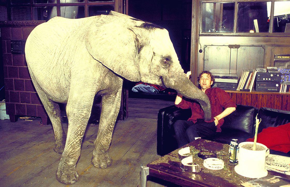 Seit er einen verzweifelten Elefanten am Hals hat, geht bei Lennard (Peter Lohmeyer) viel Porzellan zu Bruch ... - Bildquelle: Leslie Haslam ProSieben