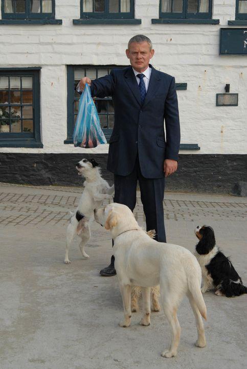 Frischfleisch und eine Hundemeute - Doc Martin (Martin Clunes) als Dompteur unterwegs ... - Bildquelle: BUFFALO PICTURES/ITV