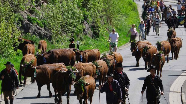 Ursprünglich war Halloween auch der Tag, an dem das Vieh in die Ställe getrie...