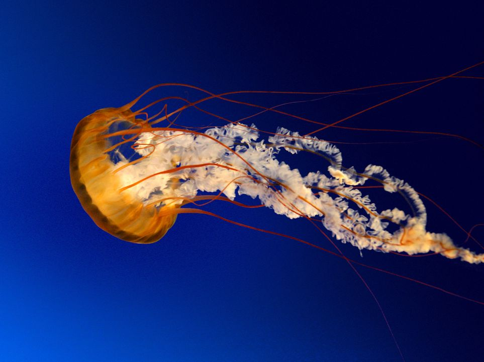 Jellyfish - Bildquelle: © Microsoft Corporation