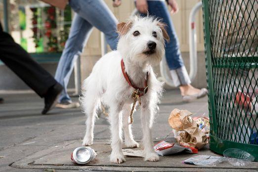 Das Hundehotel - Weil Jack-Russell Friday nicht länger im Haus wohnen darf, m...