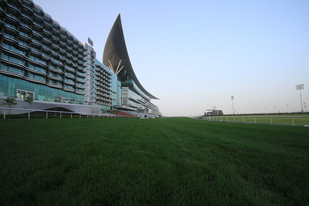 Mitten in der Wüste wächst ein Teppich von üppig grünem Rasen auf der weltweit luxuriösesten Rennbahn in Dubai, die sechs-Sterne-Luxus für Mensch un... - Bildquelle: 2010 NGC Network International,  LLC All rights reserved.