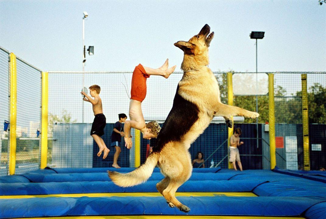 Auch ein Kommissar Rex muss fit bleiben und sich sportlich betätigen ...