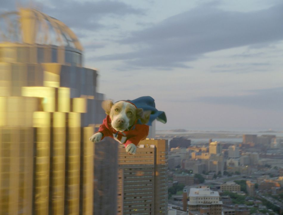 Fliegt wie ein Adler: Underdog ... - Bildquelle: Walt Disney Pictures.  All rights reserved