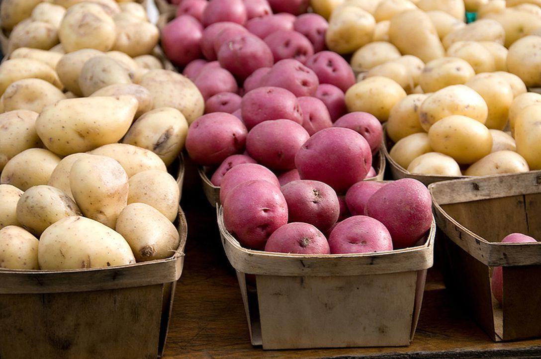 Die Kartoffel - Bildquelle: Courtesy Jupiter Images