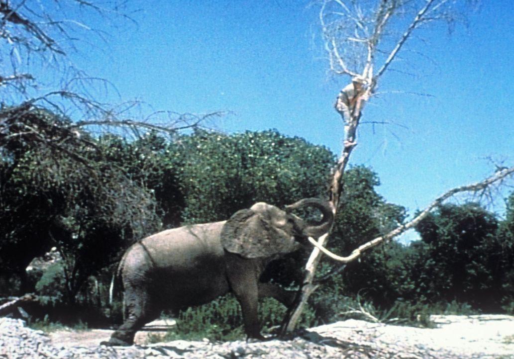 Immer fleißig dabei: ein junger Elefant ... - Bildquelle: 2007 Warner Bros. All Rights Reserved.