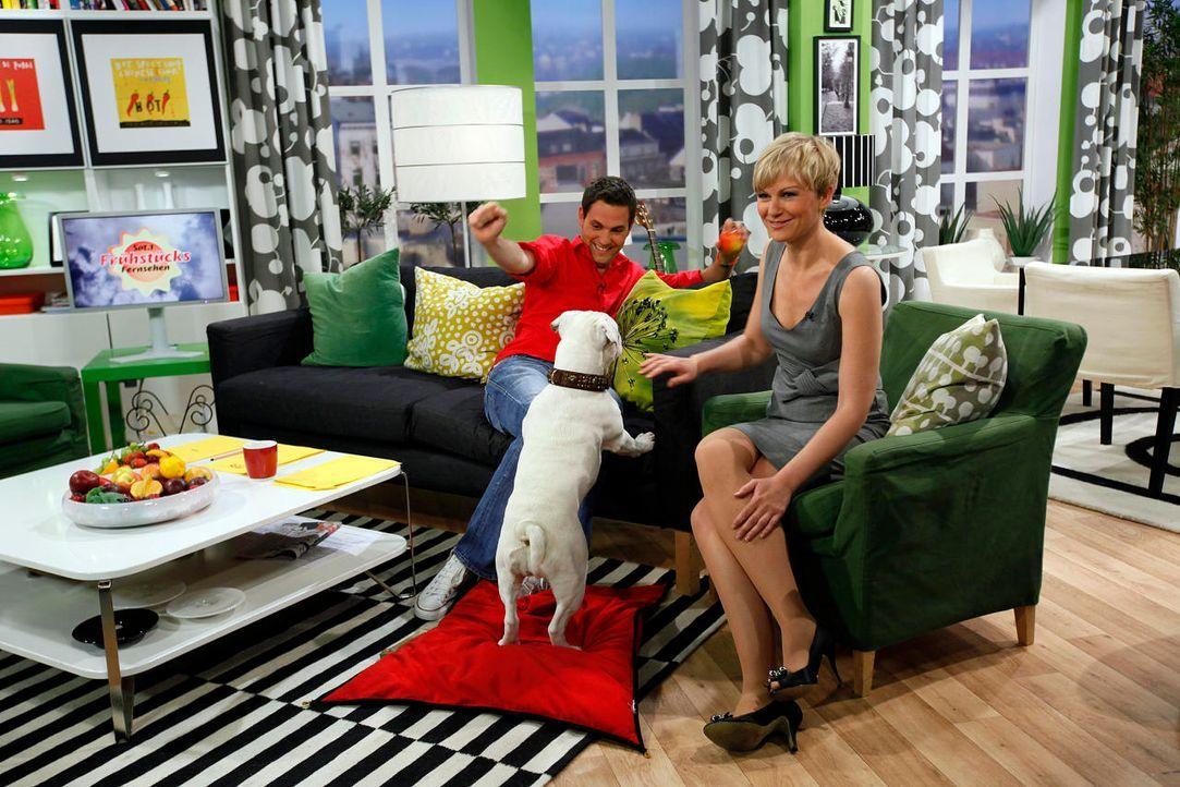 fruehstuecksfernsehen-studiohund-lotte-in-action-im-studio-103 - Bildquelle: Ingo Gauss