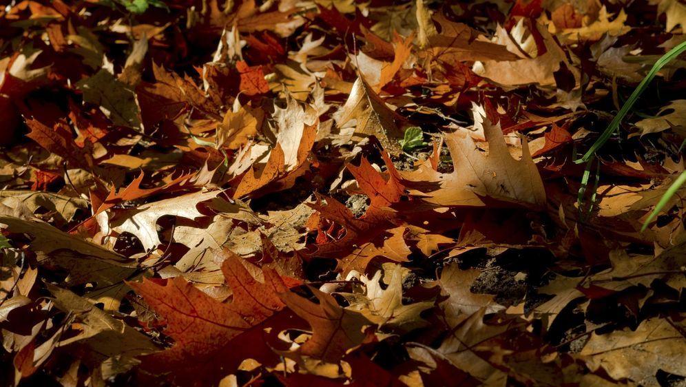 Laub kompostieren im Herbst: So geht's  - Bildquelle: pixabay.com