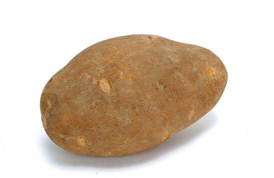 Die Kartoffel - Bildquelle: Courtesy US Potato Board