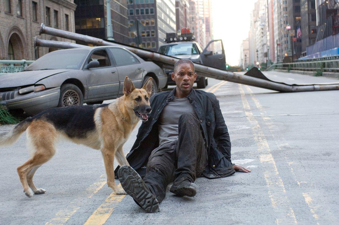Als einziger Mensch in Manhattan versucht Robert Neville (Will Smith) mit Hilfe seines eigenen Blutes, ein Gegenmittel für ein genveränderndes Virus... - Bildquelle: Warner Brothers International