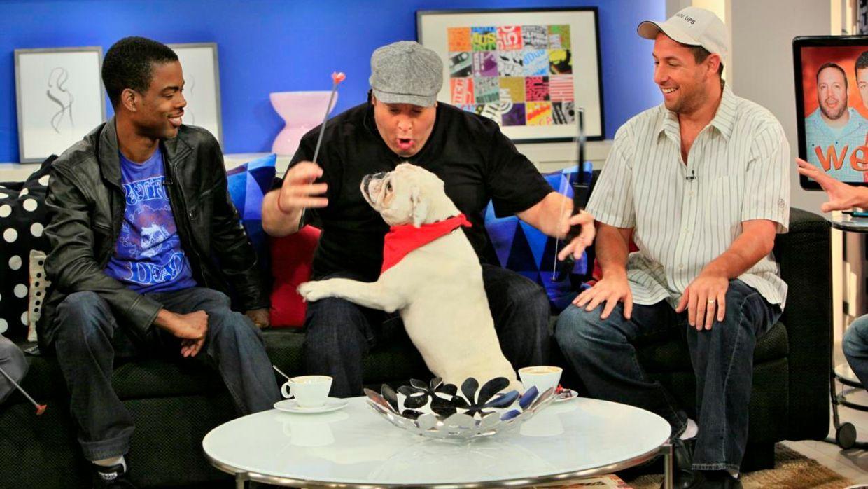 fruehstuecksfernsehen-studiohund-lotte-in-action-im-studio-073 - Bildquelle: Ingo Gauss