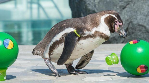 Pinguin_Flocke
