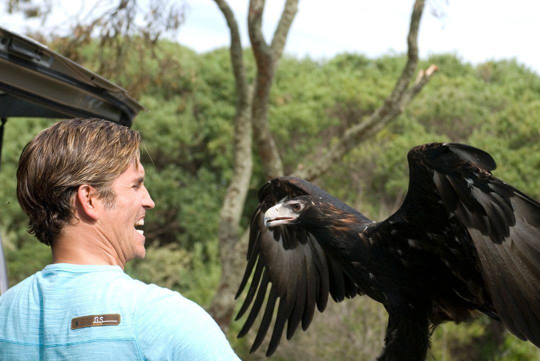 Der Angriff eines Adlers und weiterer wilder Tiere trüben das Camping-Glück von Peter (James Caviezel) und Carla ... - Bildquelle: Arclight Films