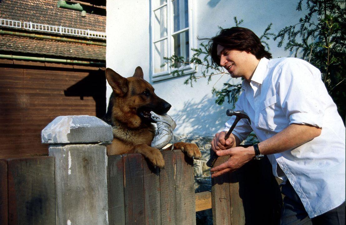 Kommissar Moser (Tobias Moretti, r.) will endlich seinen Zaun reparieren, aber Rex macht ihm mal wieder einen Strich durch die Rechnung. - Bildquelle: Ali Schafler Sat.1