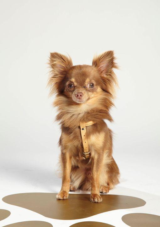 Top Dog Model - Bildquelle: ITV