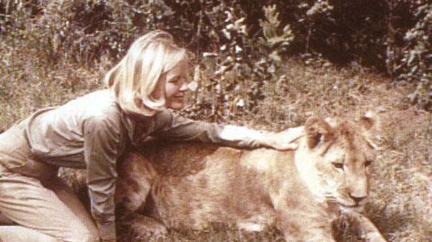 Joy (Virginia McKenna, l.) und die Löwin Elsa verstehen sich prächtig. Doch d...