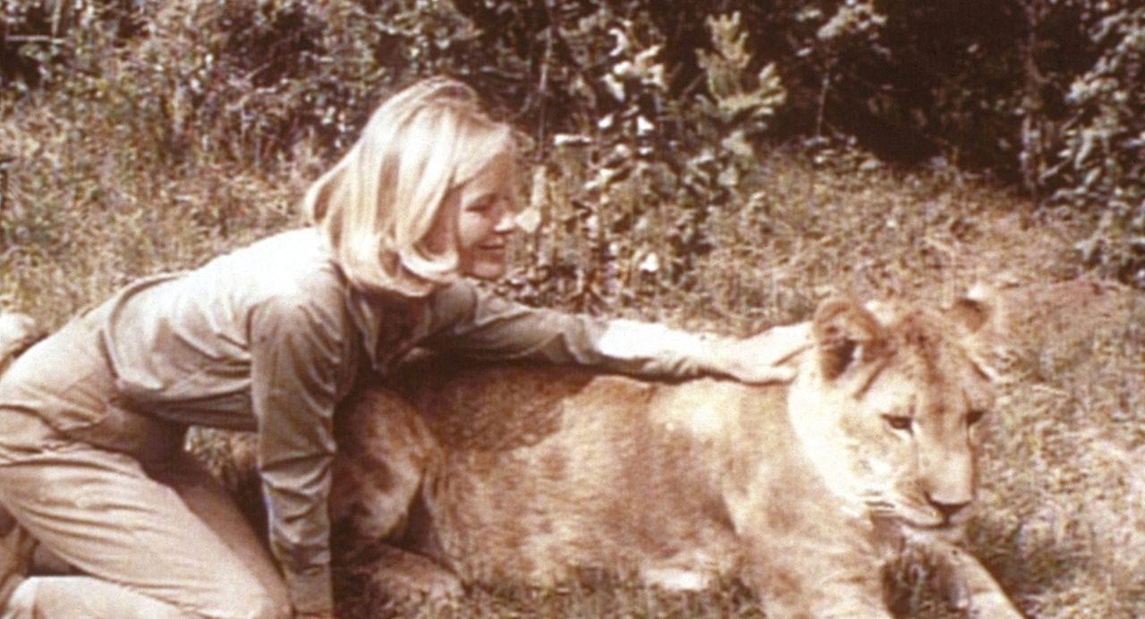 Joy (Virginia McKenna, l.) und die Löwin Elsa verstehen sich prächtig. Doch der Distriktskommissar Kendall will, dass die Löwin von der Farm verschw... - Bildquelle: 1965, renewed 1993 Columbia Pictures Industries, Inc. All Rights Reserved.