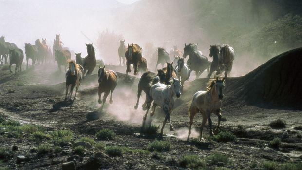 All die schönen Pferde ... © Sony Pictures Entertainment