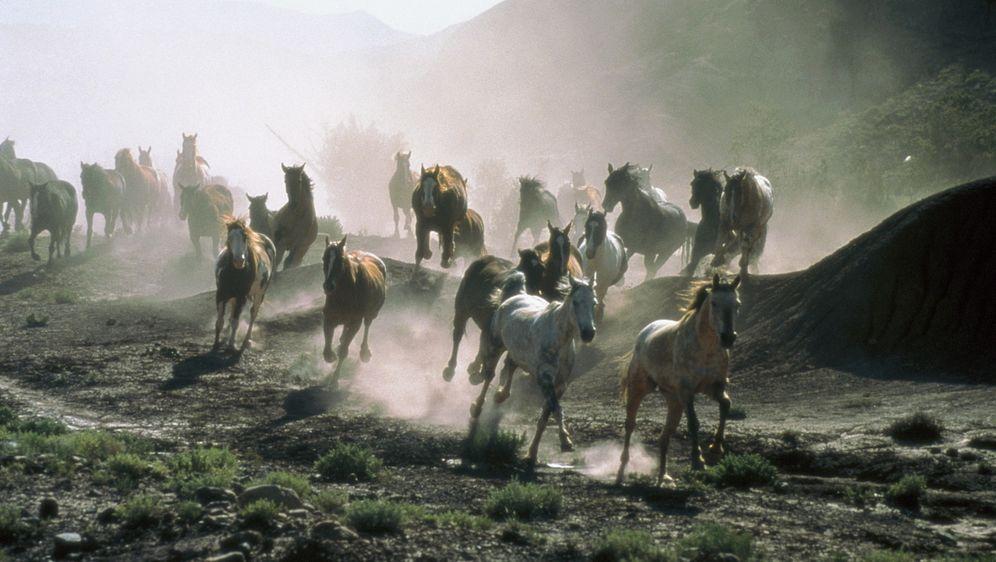 All die schönen Pferde - Bildquelle: Sony Pictures Entertainment