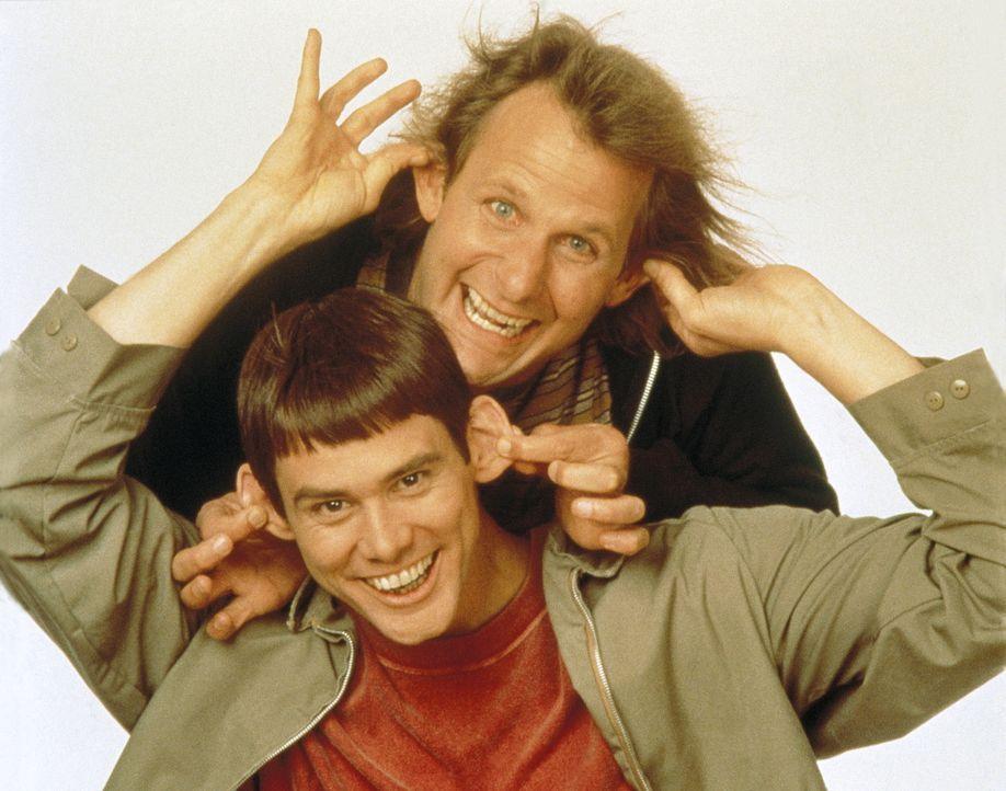 Keiner kann sie bremsen: Llyod (Jim Carrey, Unten) und Harry (Jeff Daniels, Oben) ... - Bildquelle: New Line Cinema