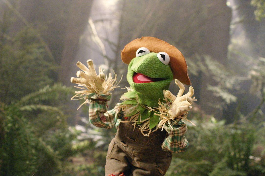 Träumt von einer Welt ohne böse Hexen: die Vogelscheuche ... - Bildquelle: The Muppets Holding Company, LLC. MUPPETS characters and elements are trademarks of the Muppet Holding Company, LLC.  All rights reserved