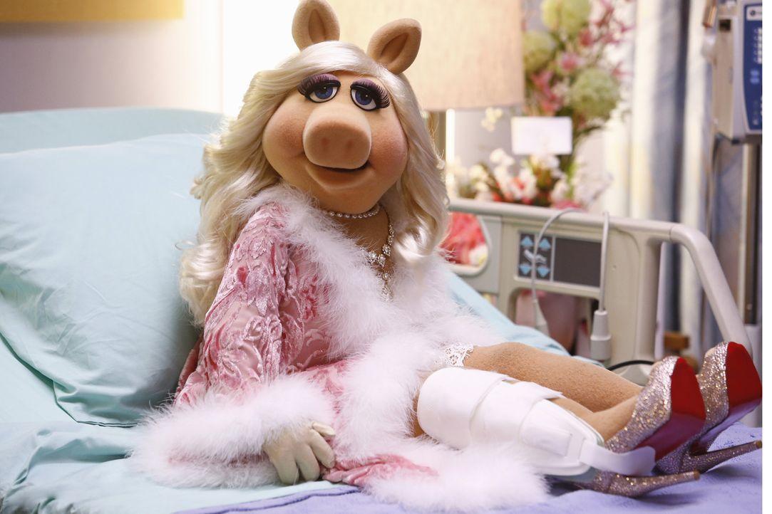Ihre Show aus dem Krankenhaus ist ein voller Erfolg: Miss Piggy ... - Bildquelle: ABC Studios