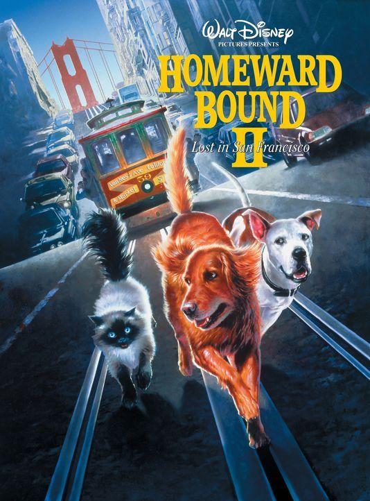 Die abenteuerlustigen Vierbeiner geraten in das Chaos der Großstadt San Francisco. - Bildquelle: Walt Disney Pictures