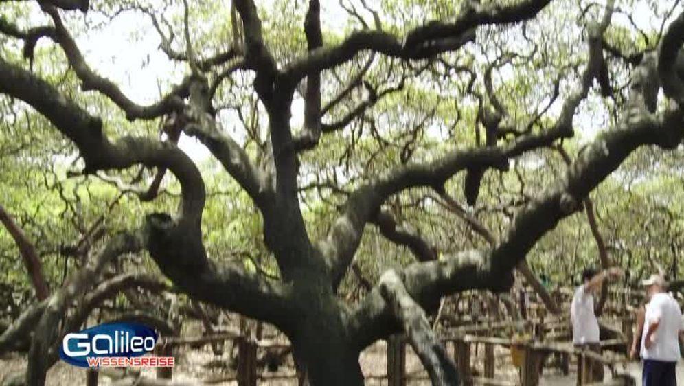 Bild Geschichte - Einbaumpark