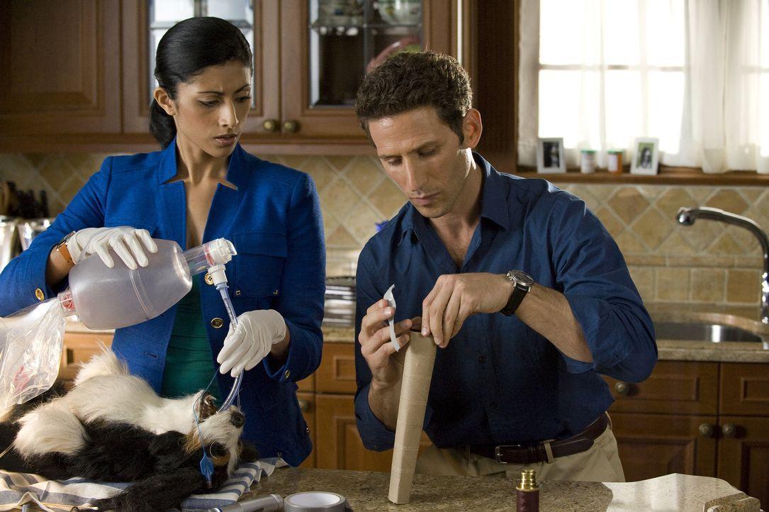 Divya Katdare (Reshma Shetty, l.) und Dr. Hank Lawson (Mark Feuerstein, r.) müssen sich ausnahmsweise um einen tierischen Patienten kümmern ... - Bildquelle: Universal Studios