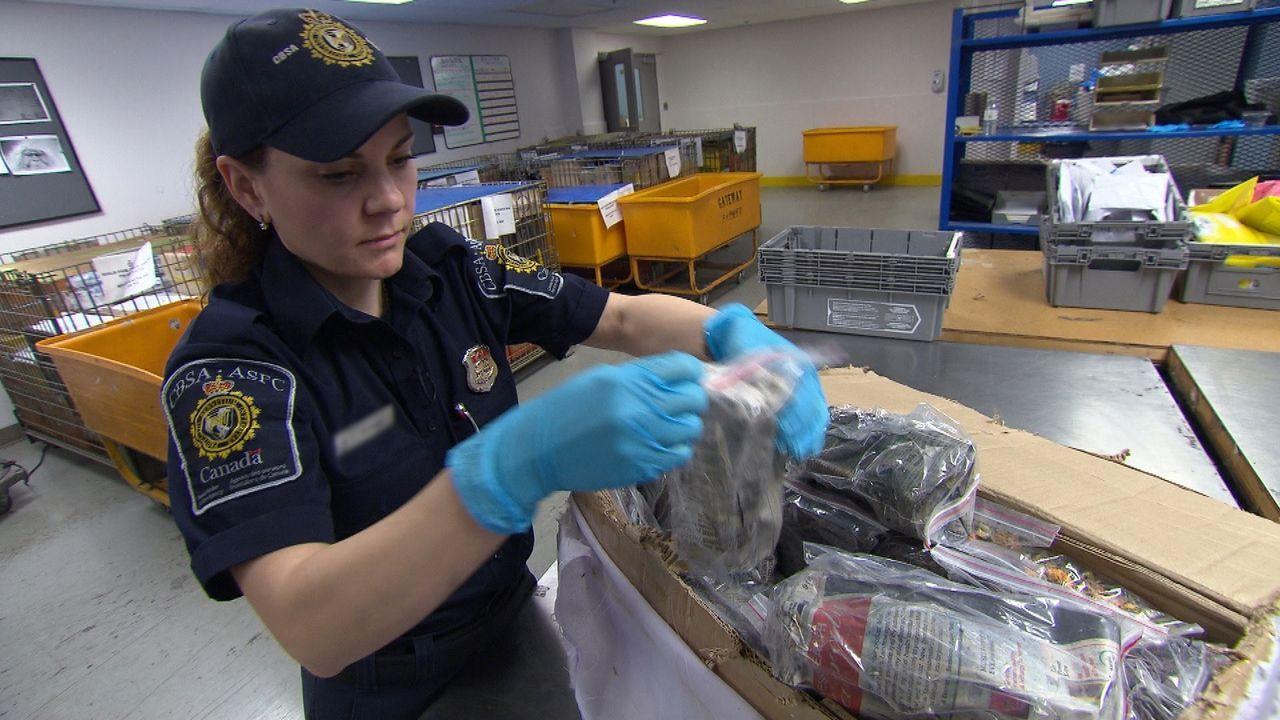 Vorsichtig durchsucht die Zöllnerin illegales Zollgut - was nicht immer ungefährlich ist ... - Bildquelle: Force Four Entertainment / BST Media 2 Inc.