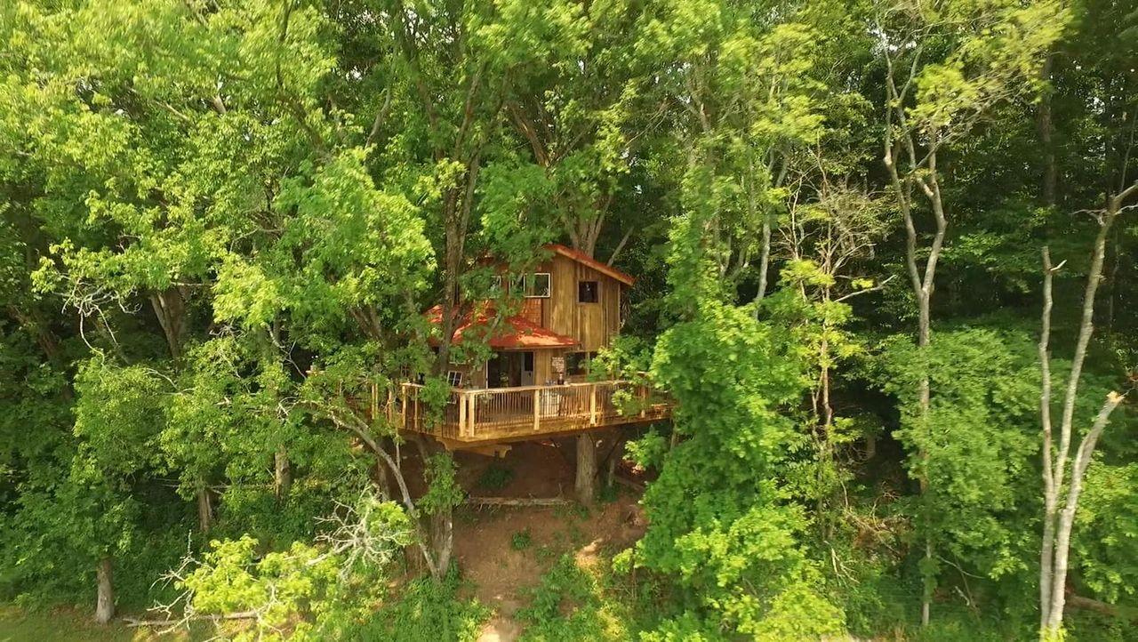 Versteckt zwischen den Bäumen soll für Michael und Denise, die seit der der High-School zusammen sind, ein Baumhaus entstehen, in dem sie mit ihrer... - Bildquelle: 2016,DIY Network/Scripps Networks, LLC. All Rights Reserved